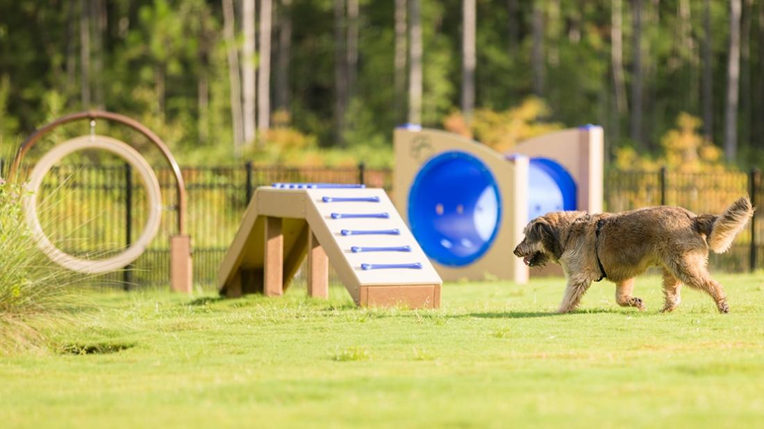Happy Dog at the Park
